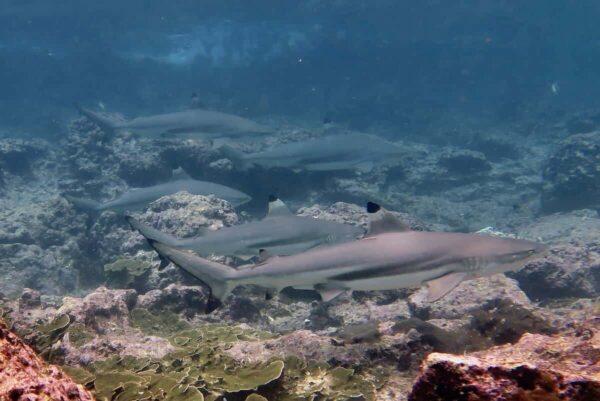 Adorer Dive Package Phuket 2