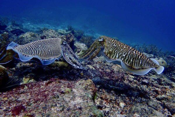 Explorer Dive Package Phuket 3