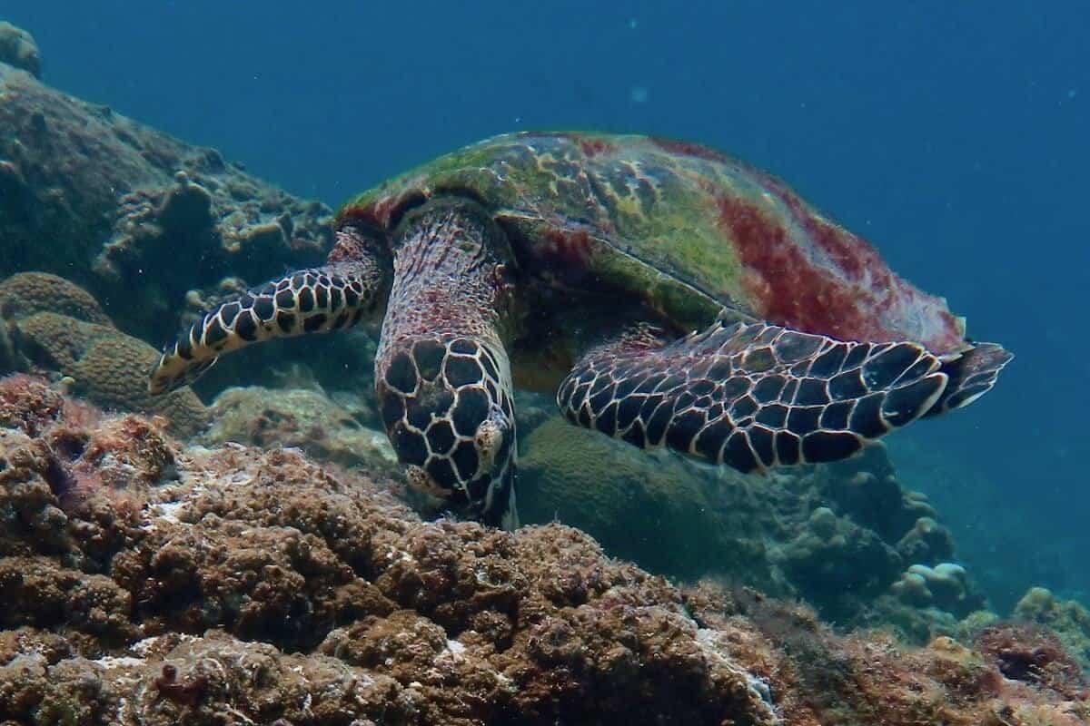 Koh Bida Nai Phi Phi Islands Phuket Dive Site 1