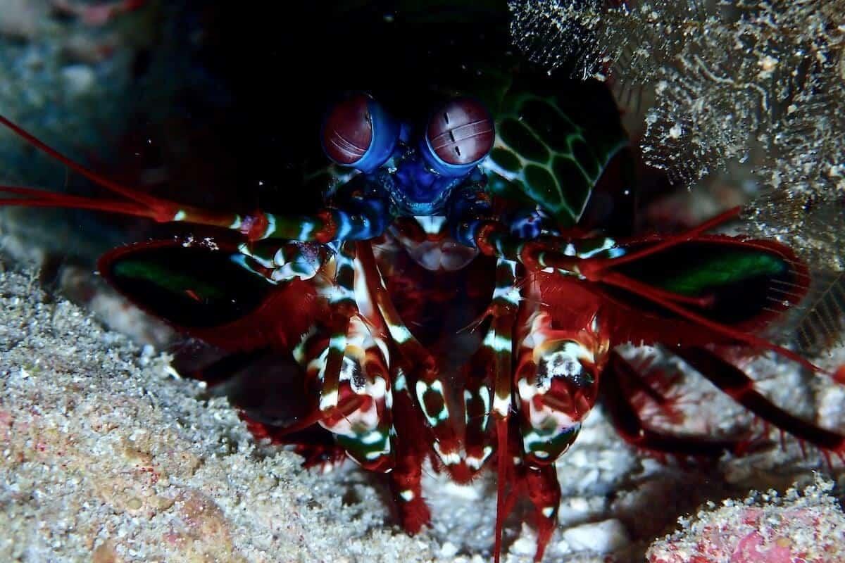 Phi Phi Dive Package Phuket 3