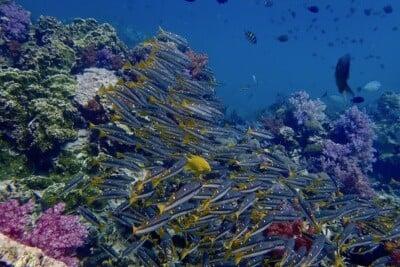 Diving in green season Phuket