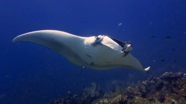 Similan Dive Package Phuket 2