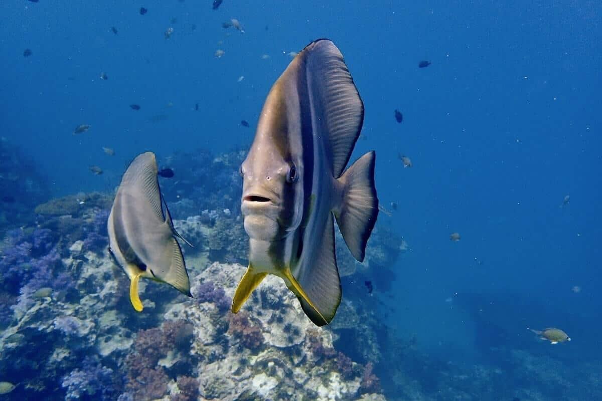 Surpise Dive Package Phuket 1